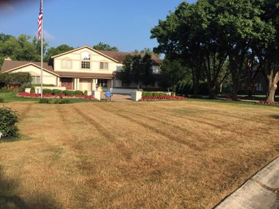 Old lawn killed with Roundup on August 15